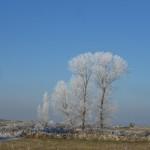 Foto 011. Vallanjo. Tarde de invierno. 'Creo que el árbol tenia frío'