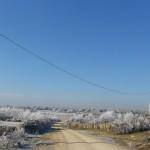 Foto 023. Camino de las Llagonicas. Diciembre 2013. 'La naturaleza disfrazada de blanco'.