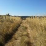 23/07/2015: Estado actual de abandono del Fuerte Nuevo de Torregamones (foto 08)